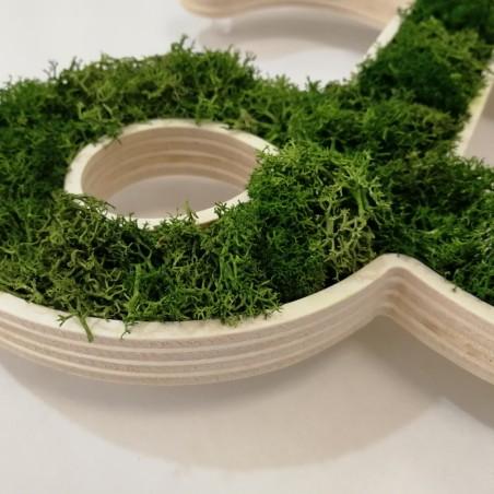 Détail enseigne végétal lichen vert naturel, socle en bois de peuplier creusé